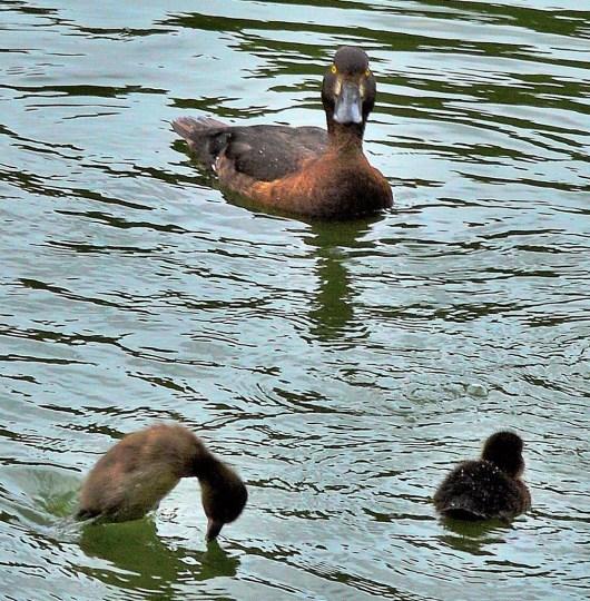 duck-monster