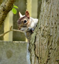 new-river-squirrel-2