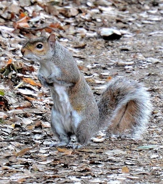squirrel-dsc_6030